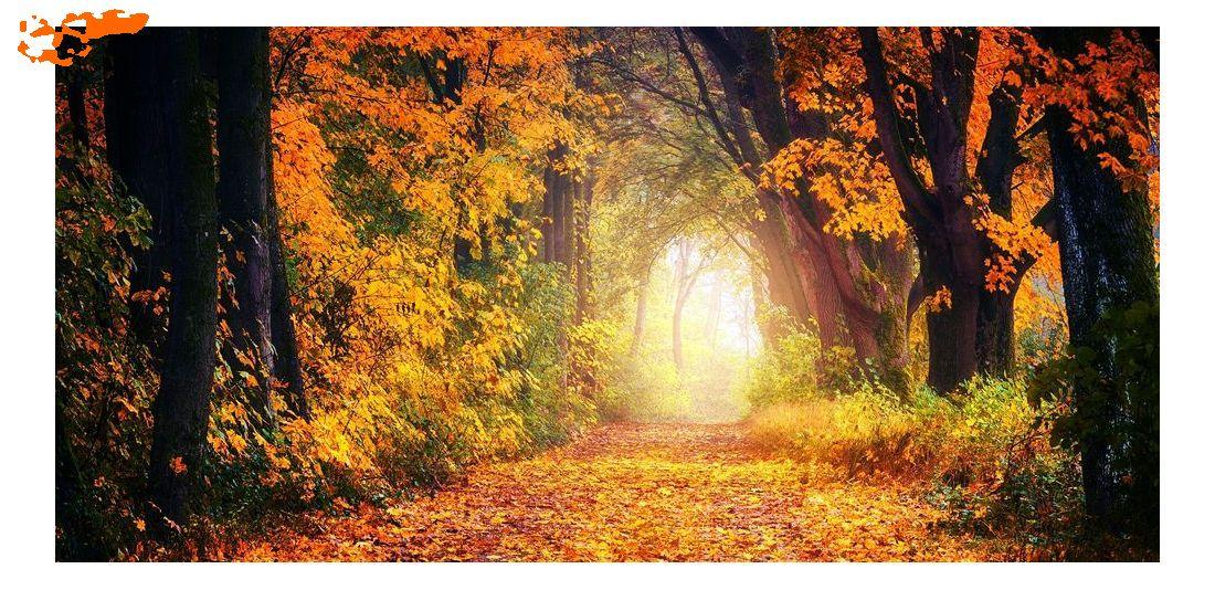 фотография осеннего леса
