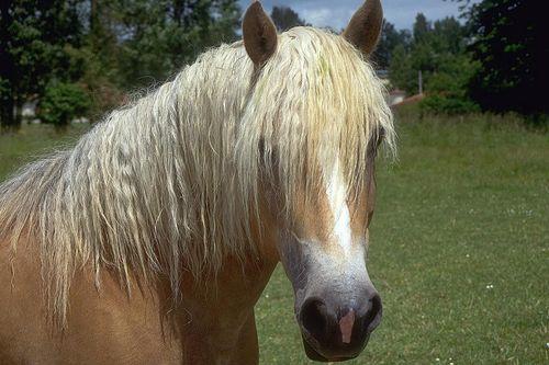 """Заговоры """"от ногтю"""" у лошадей"""